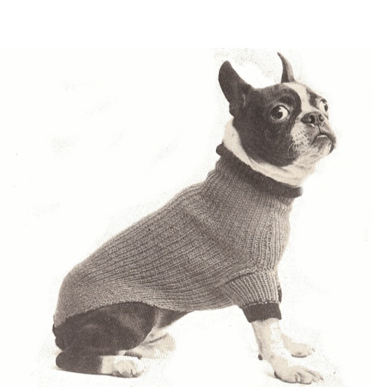 Boston terrier sweater – vintage to knit free pattern.
