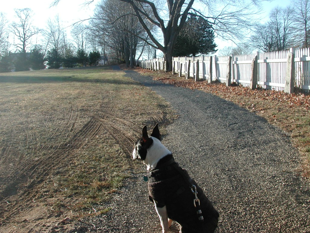 A new circular walking path is being developed in Middletown at what was Pieper-Olson Vet.