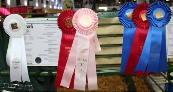 Ribbons at The Big E. Image by Moo Dog Press Magazine, used with permission.