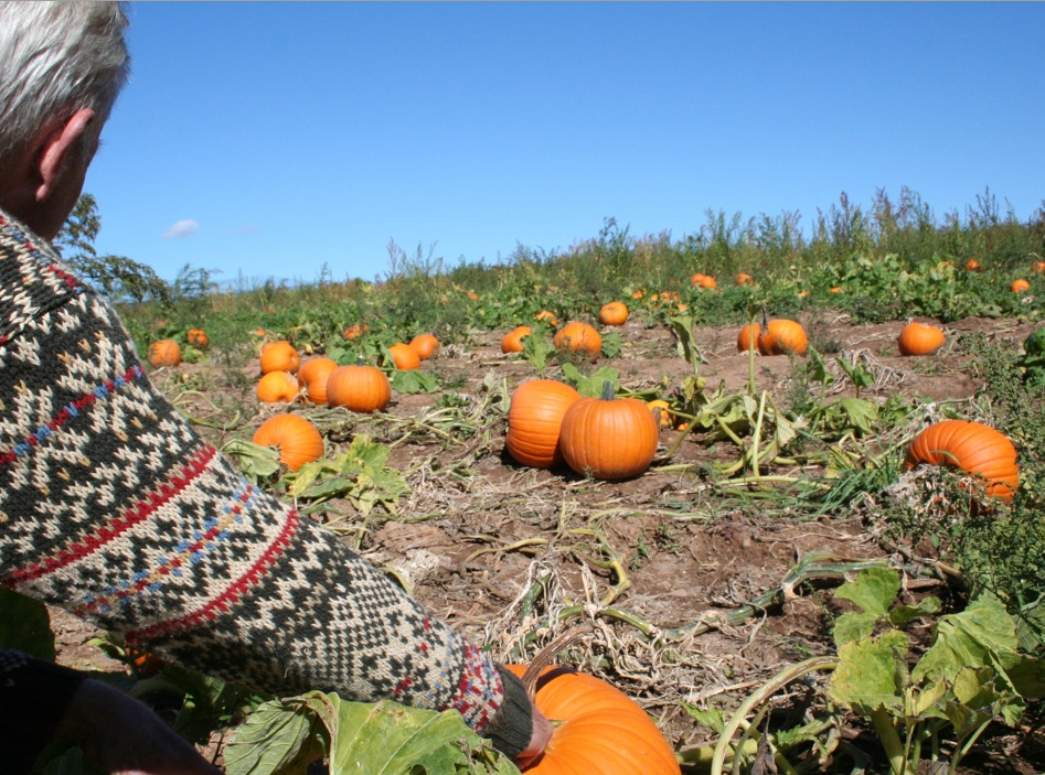 Favorite knit sweater and picking pumpkins and apples. Moo Dog Knits Magazine.