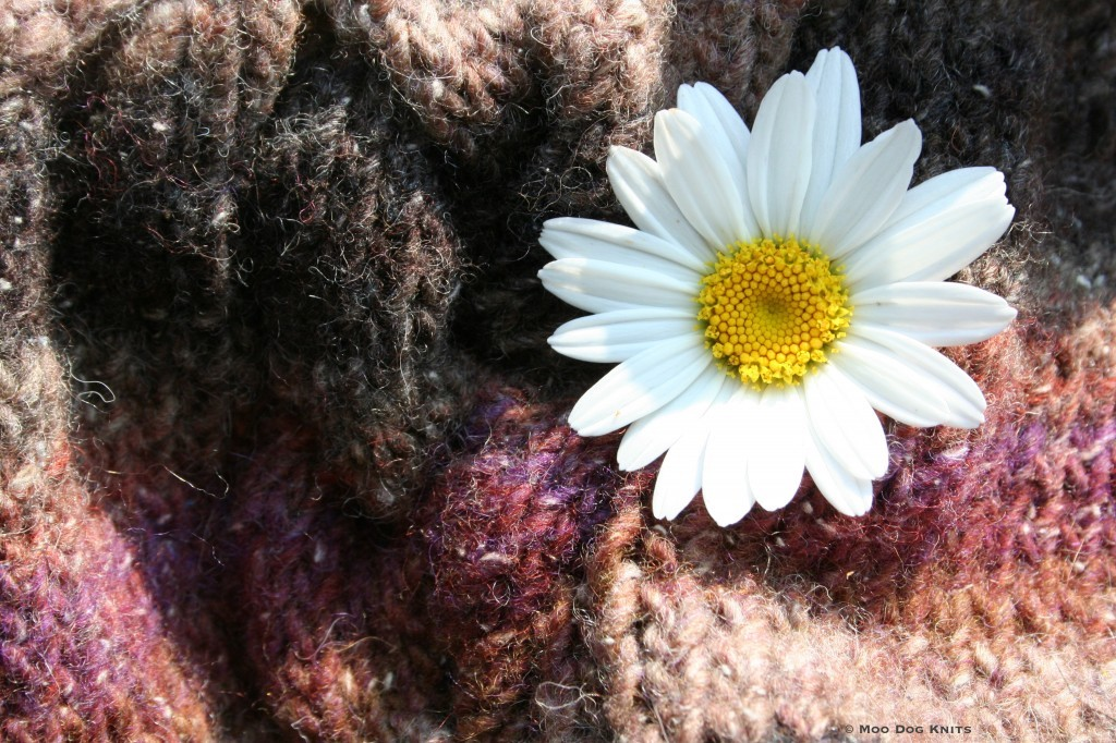 Color shift knit daisy. Photo Moo Dog Knits, all rights reserved.