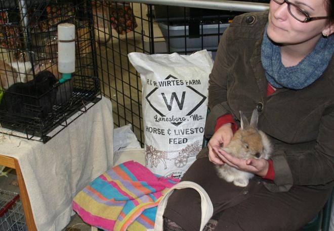Bliss - a soft-coated angora meets a gentle human at the Laurel Ledge Farm Fibers booth. Angora rabbits and alpaca yarn, wearable fiber art, felted hats, too.