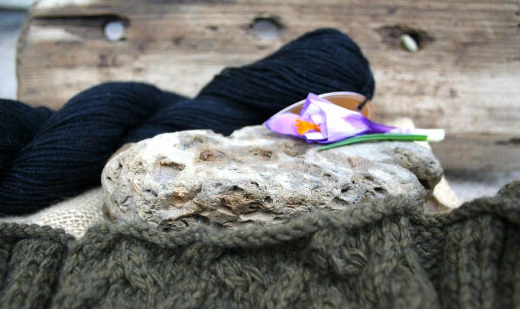 Boston terrier cable knit sweater with a fossil-filled rock and a purple crocus. Moo Dog Knits photograph and the story behind it.