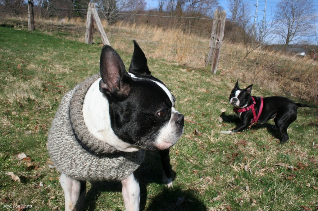 Chewy and a knitted sweater with Til in an old cow pasture.