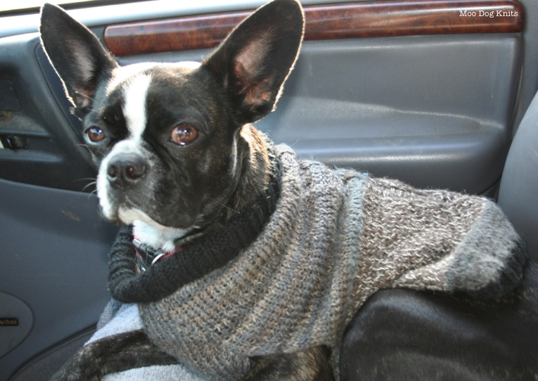 Boston terrier hand knit sweater is layers of muted color
