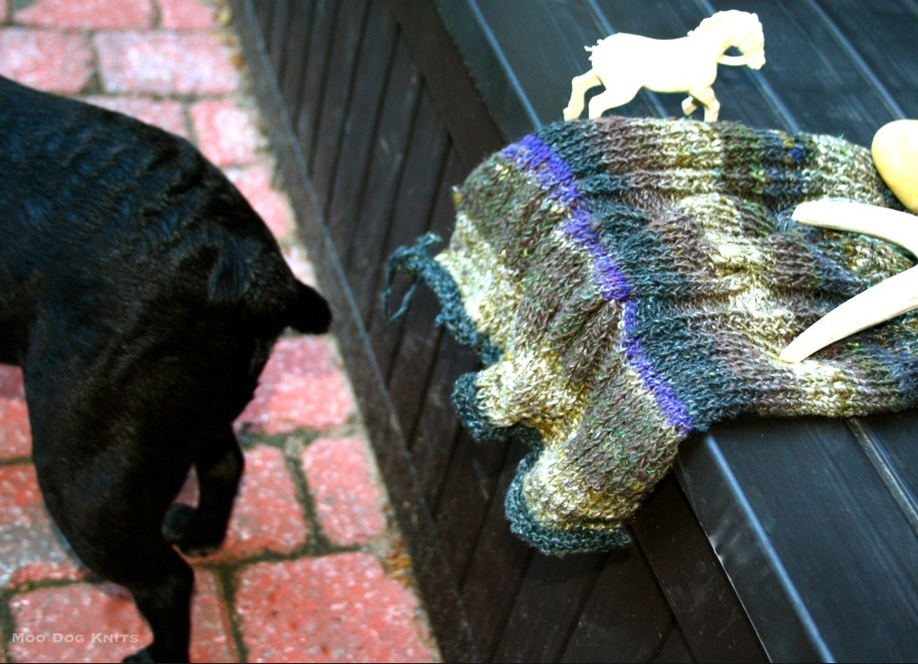 Boston terrier tail and Noro knit. © Moo Dog Knits