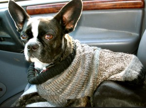 One like this knit-to-fit prototype for a long, lean Boston terrier.