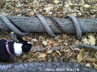 Bittersweet. © Moo Dog Knits