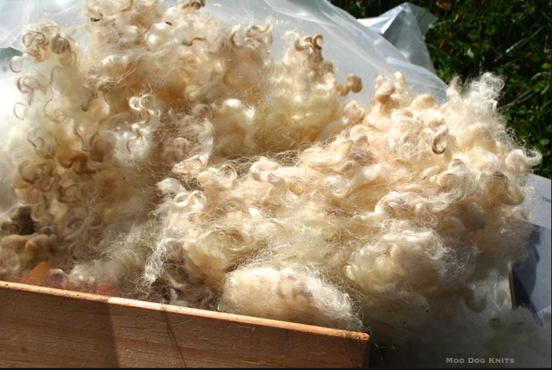 Cloud of fleece. © Moo Dog Knits