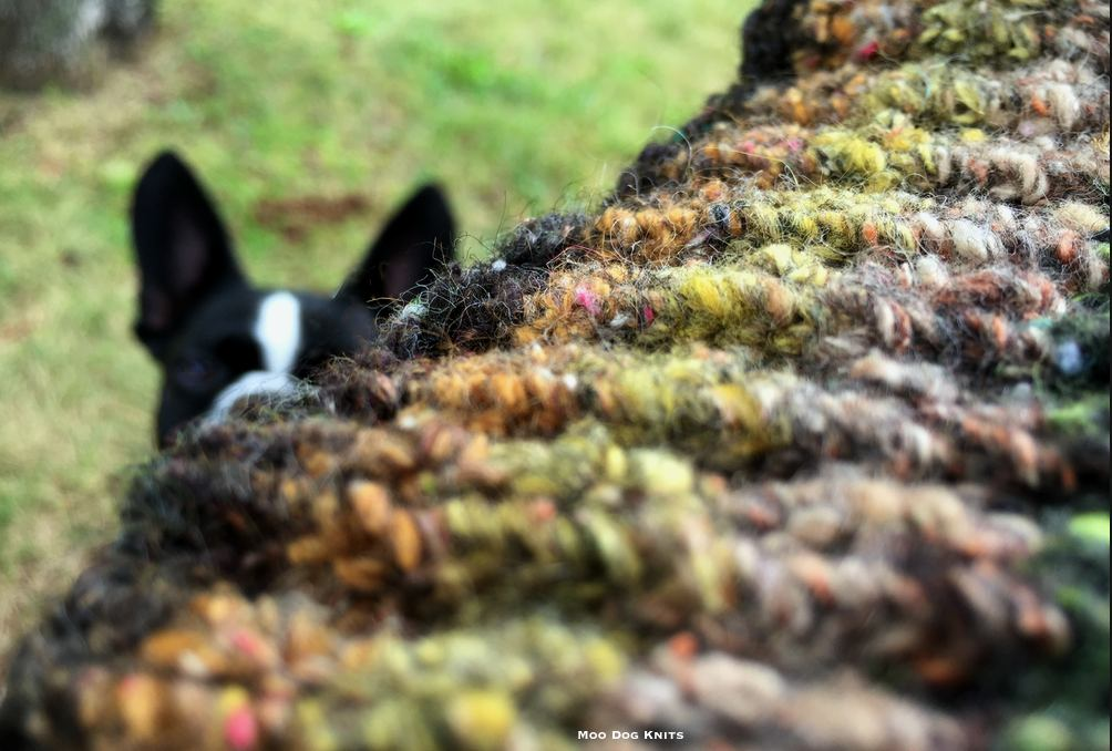 Noro edge detail and Boston terrier.