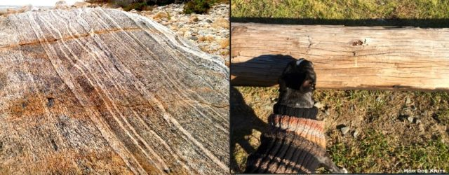 Stone layers and earthy knit dog sweater.