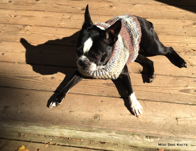 Boston terrier custom knit wool sweater